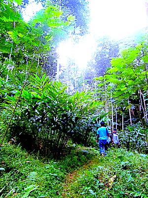 Kondisi pepohonan di Pasirbentang yang sudah meninggi. Padahal, 10 tahun lalu, area ini masih berupa lahan kritis yang ditumbuhi ilalang. (Foto: Yudha PS)