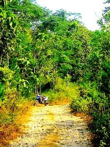 Kondisi pepohonan hutan di Karangsoak yang mulai meninggi. (Foto: Yudha PS)